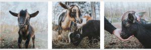 Riley-Virtual-Farm-Experience-with-Santa-Mrs-Claus-3