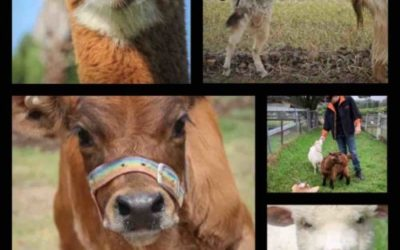 Farm Tour and Trivia in Australia! (Online)